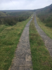 A beautiful path, slightly longer, but it doesn't go down.